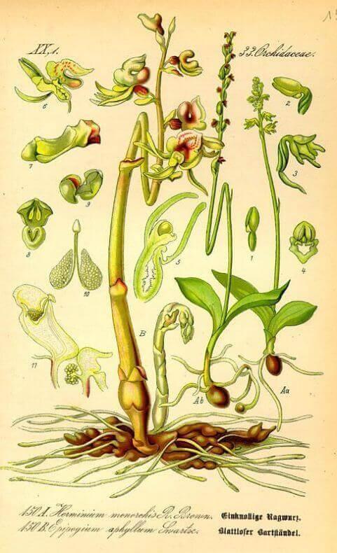 Orchidea fantasma in Sila - Casa Gemma B&B Lamezia Calabria